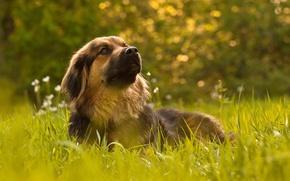 Picture grass, dog, Wonderful Dog Life