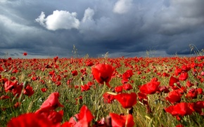 Picture clouds, red, Field, storm