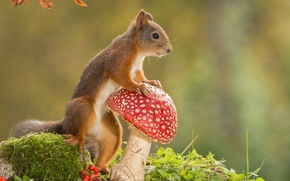 Wallpaper animal, mushroom, nature, rodent, protein, mushroom