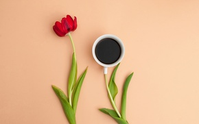 Picture flower, leaves, Tulip, coffee, petals, Cup, still life