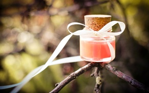 Picture nature, tree, branch, tube, bow, ribbon, jar