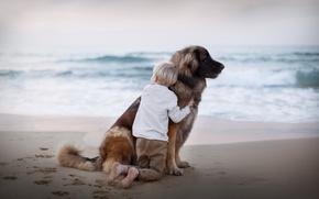 Picture sea, dog, boy
