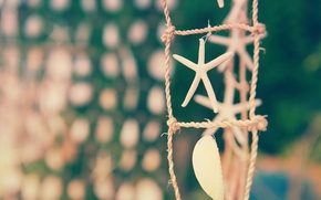 Picture sea, focus, shell, starfish