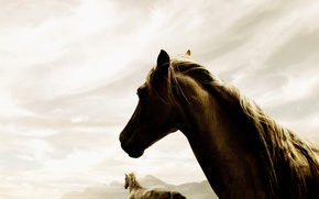 Picture the sky, fog, 150, horse