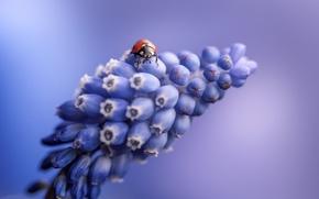 Picture flower, nature, ladybug