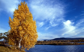 Wallpaper shore, leaves, autumn, yellow, the sky, river, clouds, birch