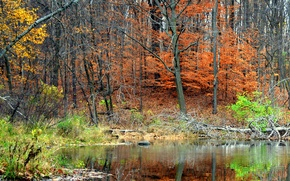 Picture autumn, forest, trees, pond, reflection