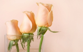 Picture flowers, roses, vase, pink, buds