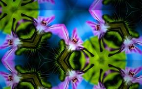 Picture line, flowers, symmetry, kaleidoscope