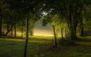 Picture summer, fog, Park, morning, fence