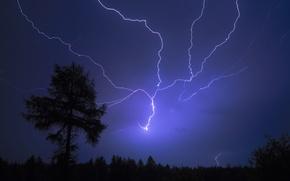 Wallpaper tree, lightning, night, flash