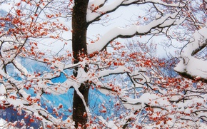 Wallpaper winter, freeze, mountains, branches, tree, leaves, clouds, snow, frost