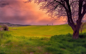 Picture the sky, grass, clouds, trees, nature, hills, glow
