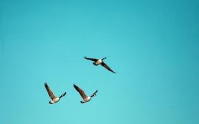 Wallpaper the sky, birds, nature