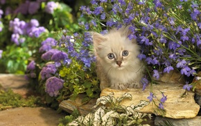 Picture cat, cat, flowers, stones, kitty, lilac, Kote, Peeps