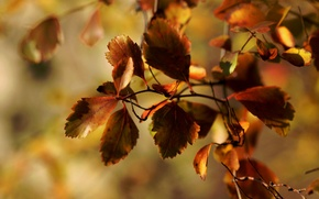 Picture macro, foliage, branch, autumn, Janet рhotography