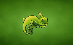 Wallpaper green, chameleon, lizard, chameleon