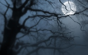 Picture night, fog, the moon
