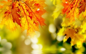Picture leaves, macro, yellow, over the water