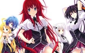Wallpaper look, smile, anime, tail, school uniform, ears, anime, always koneko, asia argento, himejima ake'no, highschool ...