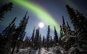 Picture winter, forest, snow, trees, stars, Northern lights, ate, Alaska, Alaska, Denali National Park, starry sky, ...