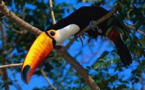 Picture bird, exotic, tookie