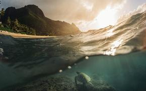 Wallpaper the ocean, sea, turtle