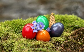 Picture flowers, moss, eggs, Easter, bump