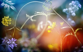 Picture grass, light, flowers, nature, spring, yellow, purple
