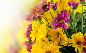 Picture flowers, bouquet, chrysanthemum, flowers, bouquet, chrysanthemums