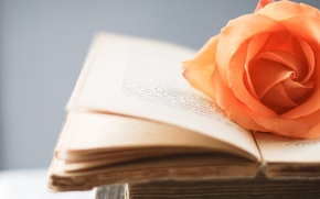 Picture style, flowers, wallpapers, background, Wallpaper, book, rose, owner, orange, page, flower