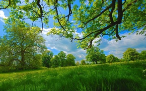 Picture summer, grass, trees, branches, meadow