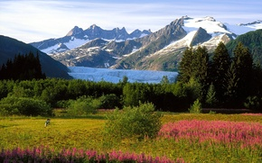 Picture snow, trees, flowers, mountains, people, Alaska, meadow