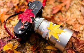 Picture Camera, autumn colors, Leica