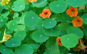 Picture leaves, flowers, carpet, meadow