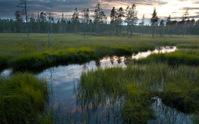 Picture forest, the sky, grass, water, nature, reflection, swamp