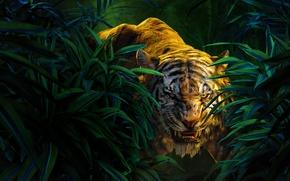Picture Scarlett Johansson, Jungle, Fantasy, Nature, Wood, Tiger, Snake, The, Wild, Boy, Kid, Idris Elba, Panther, …