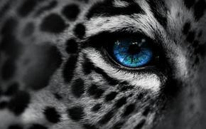 Picture macro, eyes, leopard, leopard, eye, Eg-Art