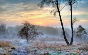 Wallpaper fog, morning, winter, snow, nature, frost