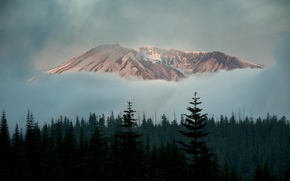 Picture forest, clouds, snow, trees, mountain
