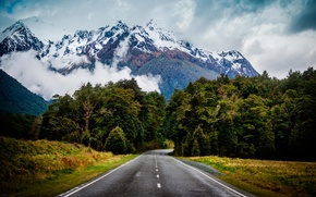 Picture road, greens, nature, fog, Wallpaper, ate, garderella