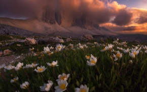 Wallpaper clouds, light, flowers, mountains, nature, Alps