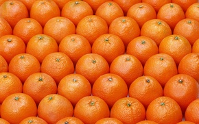 Picture pattern, fruits, oranges, ordered
