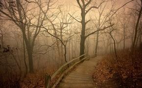Picture autumn, fog, Park