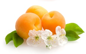Wallpaper flowers, fruit, leaves, apricots