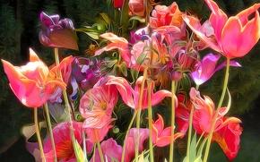 Picture line, rendering, paint, Tulip, petals