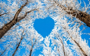 Picture winter, the sky, snow, trees, branches, nature, heart, heart