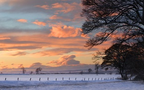 Picture winter, snow, trees, landscape, sunset, nature