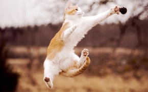 Picture cat, jump, paws, white, red, bump