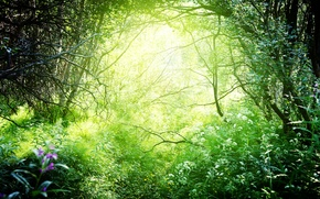 Picture greens, forest, grass, the sun, trees, branches, nature, the bushes